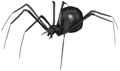 A black widow spider is one of the insects treated in a pest control treatment in Carlsbad, NM.