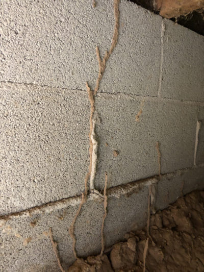 Termite mud tubes under a home on a brick foundation..