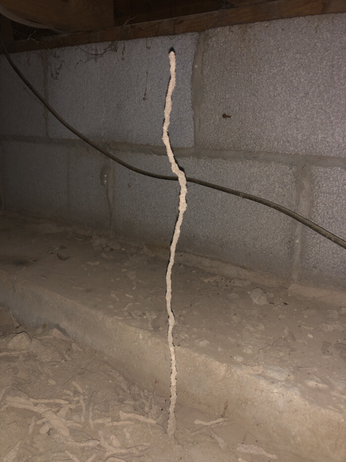 A desert termite mud tube found under a home in Carlsbad, New Mexico.